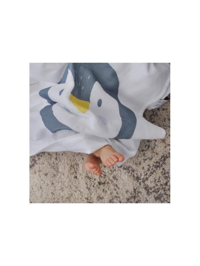 Mussola pinguino